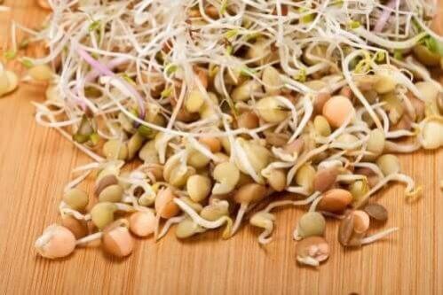 3 receitas saudáveis com brotos de lentilha