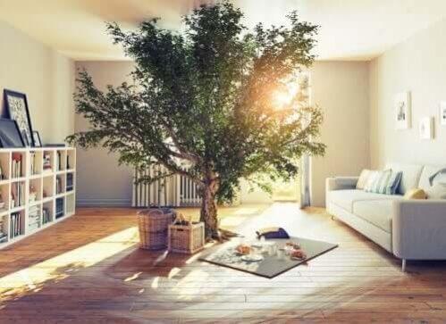 Maneiras sustentáveis de decorar a casa