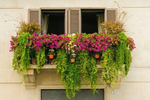 Flores na janela de casa