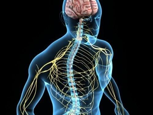 Funções do sistema nervoso prejudicadas ausam tremor essencial