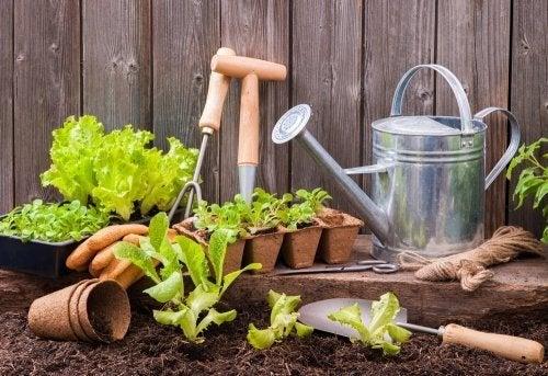 Como preparar sua horta urbana