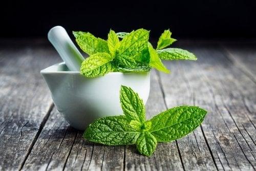 Vaporização com menta para aliviar os sintomas do resfriado