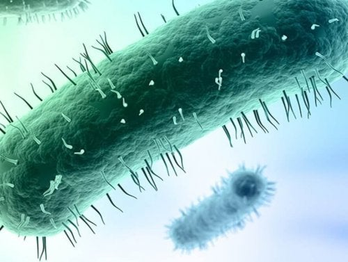 Mycoplasma-genitalium