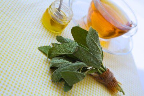 Sálvia e mel para tratar cortes e arranhões