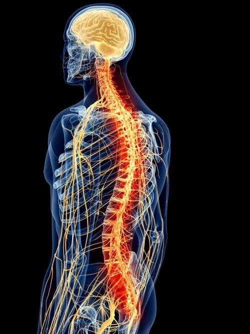 Estruturas das costas