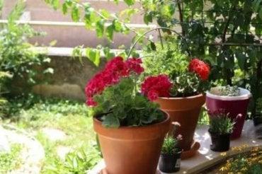 Flores de verão: 6 opções para o seu jardim