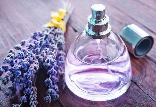 Perfume de extrato de lavanda