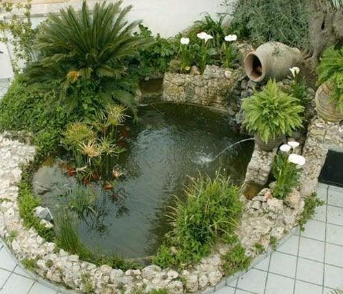 Plantas aquáticas no seu jardim