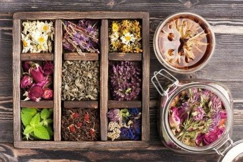 Plantas de fitoterapia