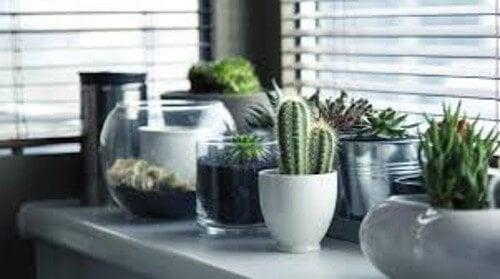 Plantas que precisam de pouca luz mas trazem muita energia