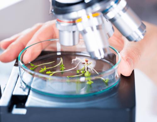 Teste de plantas para fitoterapia