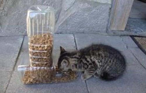 Os gatos e sua alimentação