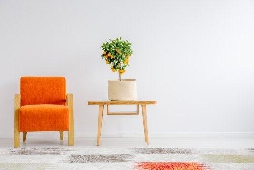 Como fazer arranjos de flores minimalistas