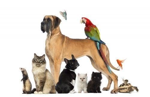 Qual animal de estimação escolher para o meu filho