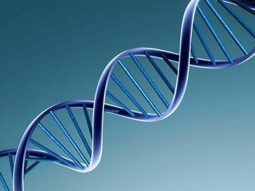 O DNA e as características físicas