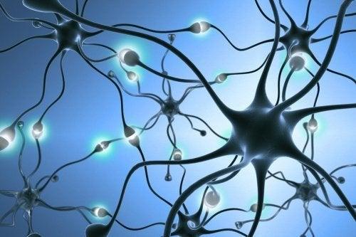 Neurogênese: como são gerados novos neurônios?