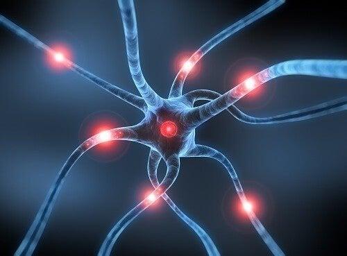 Rasagilina para os neurônios