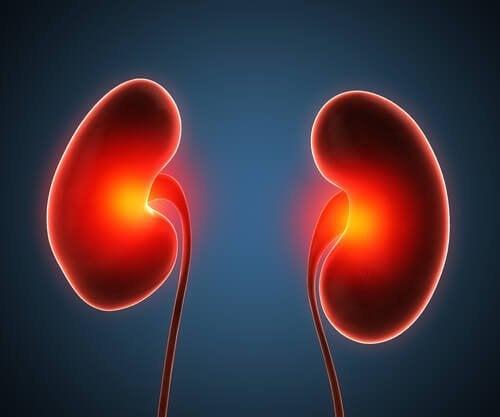 Os rins e a vasopressina