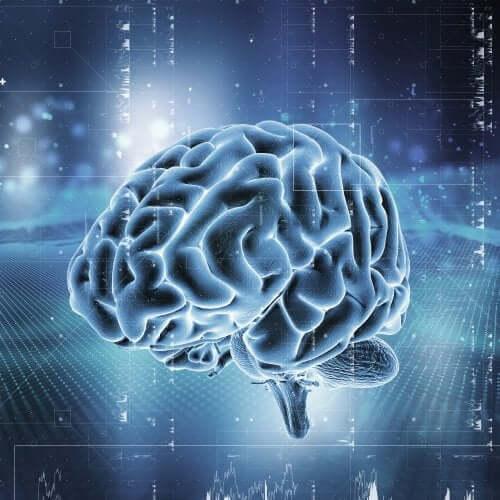 Sistema de recompensa cerebral: como funciona?