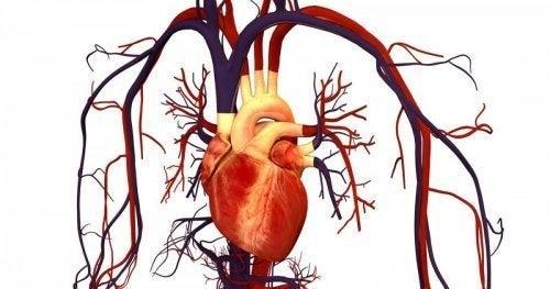 Controle o colesterol para prevenir donças cardiovasulares