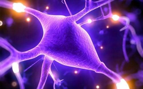 Magnésio ajuda a estabelecer sinapses