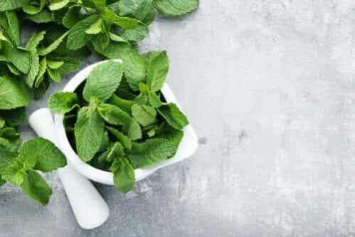 3 soluções com menta para os problemas digestivos