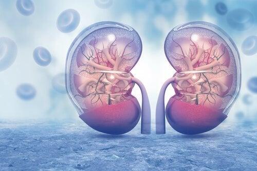A poliúria está relacionada aos rins