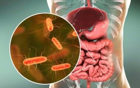 Germes nos intestinos