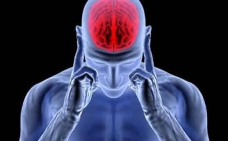 Efeito da norepinefrina no organismo