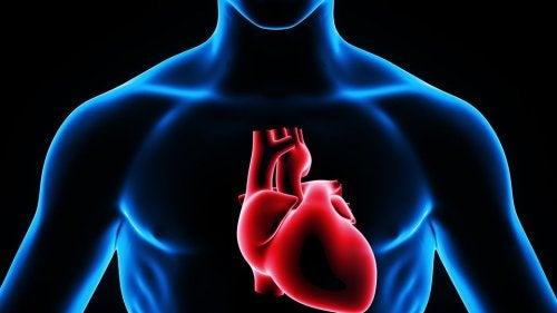 Representação do coração