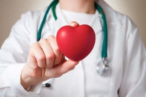 Brinquedo de coração nas mãos do médico