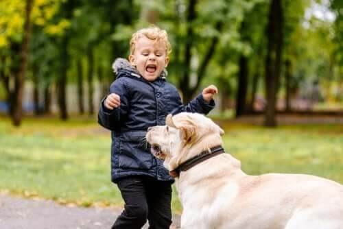 Meu filho tem medo de animais. O que devo fazer?