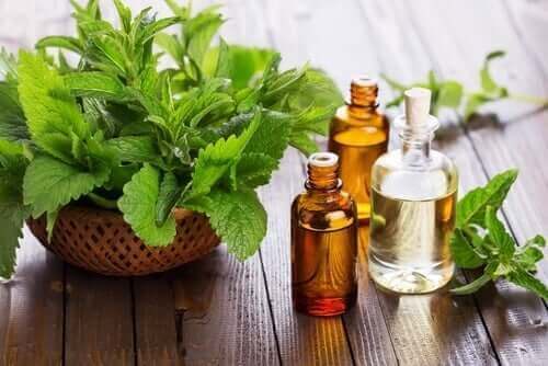 óleo essencial de menta para aliviar o refluxo gastroesofágico