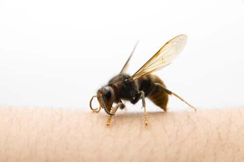 O que fazer se formos picados por uma vespa asiática?