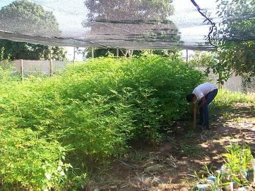 Doenças nas plantações