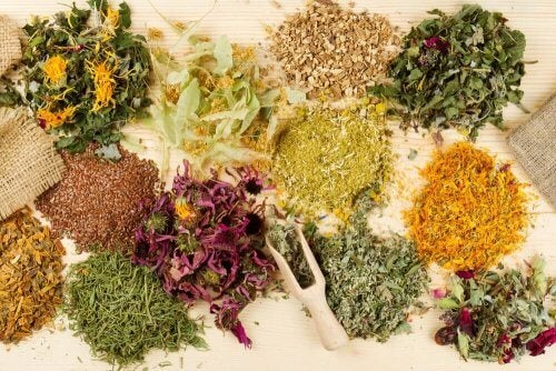 Diferentes ervas medicinais