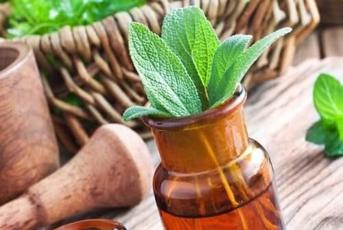 As 15 melhores ervas medicinais e seus usos