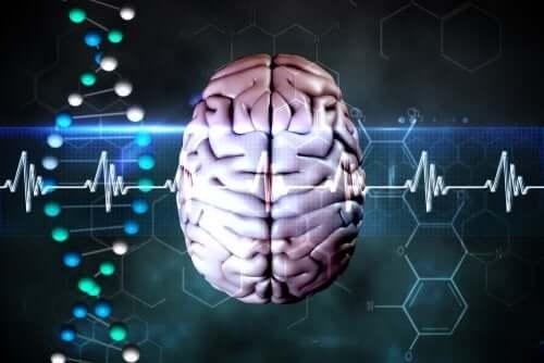 Mecanismos cerebrais de defesa