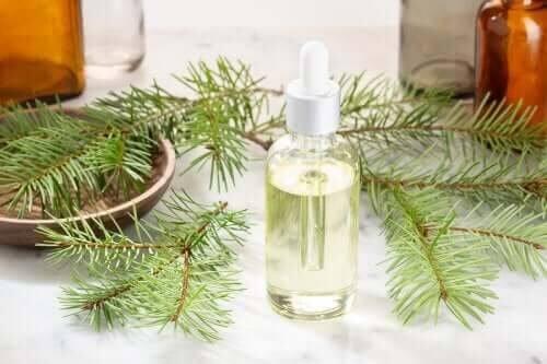 Óleo essencial de pinho para aliviar os resfriados