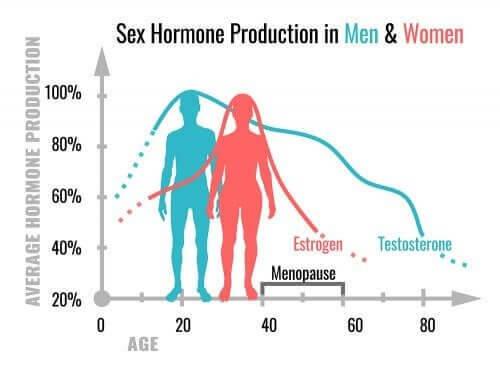 Quais são as funções dos hormônios sexuais?
