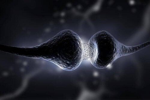 Interconexão neuronal