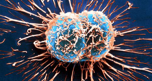 Sistema imunológico e tratamento do câncer
