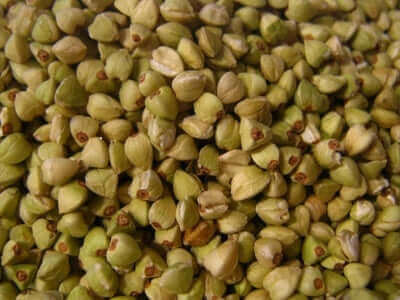 O trigo mourisco é uma boa alternativa aos cereais com glúten.