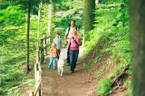 Você pode optar por uma viagem em família para apreciar a natureza do outono.
