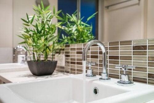 O bambu está entre as melhores plantas para o banheiro