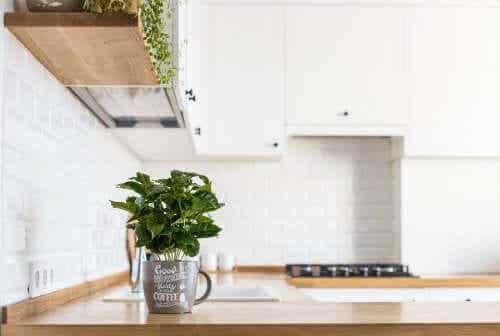 Como ter plantas aromáticas frescas na cozinha