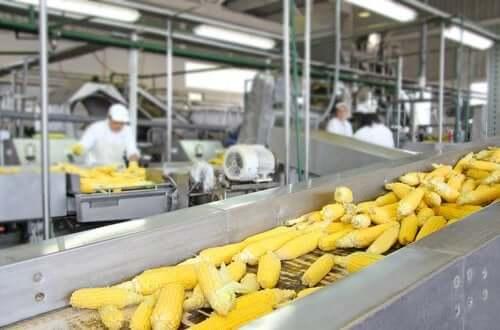 Influência dos processos tecnológicos no valor nutricional dos alimentos