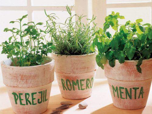 Vasos cheios de plantas aromáticas