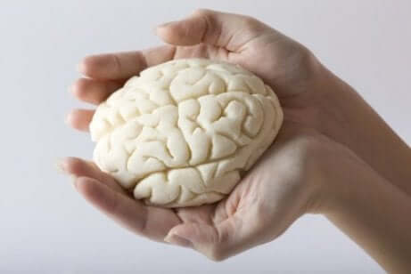 Miniatura de cérebro humano