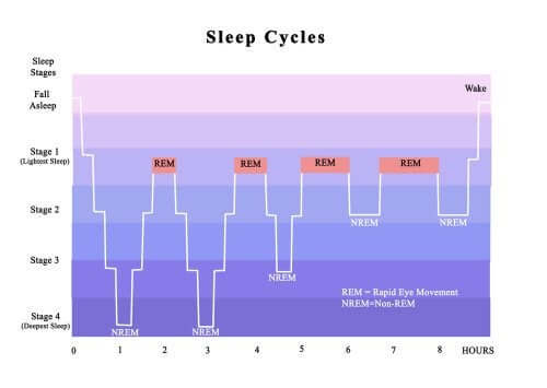 Relação entre o transtorno de insônia com os ciclos do sono